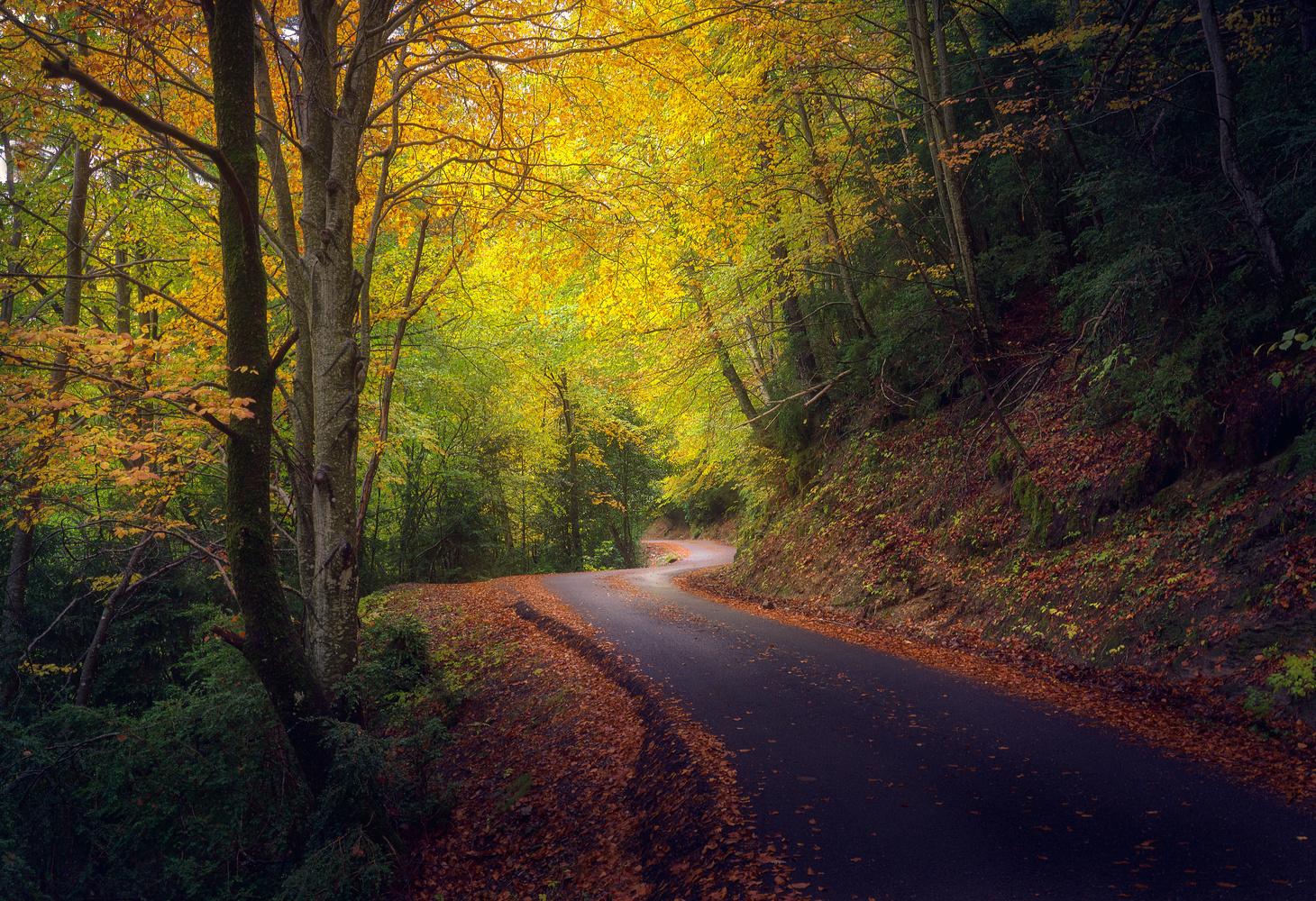 Autumnal Curves by Ricardo Gayan