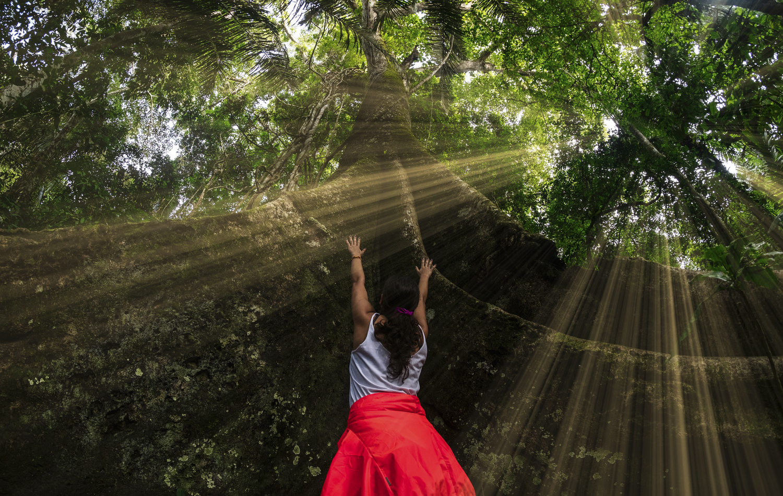 Jungle light of the gods by Pedro Pulido