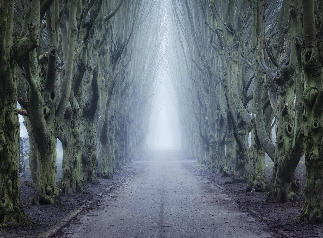 Mist Alley by Mikkel Beiter