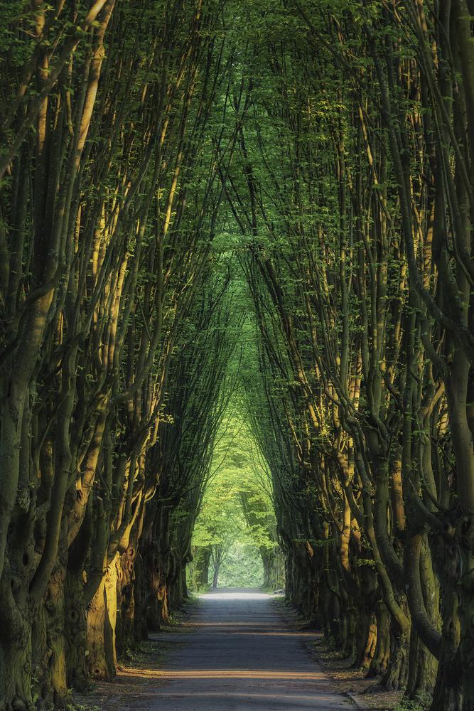 The Alley by Mikkel Beiter