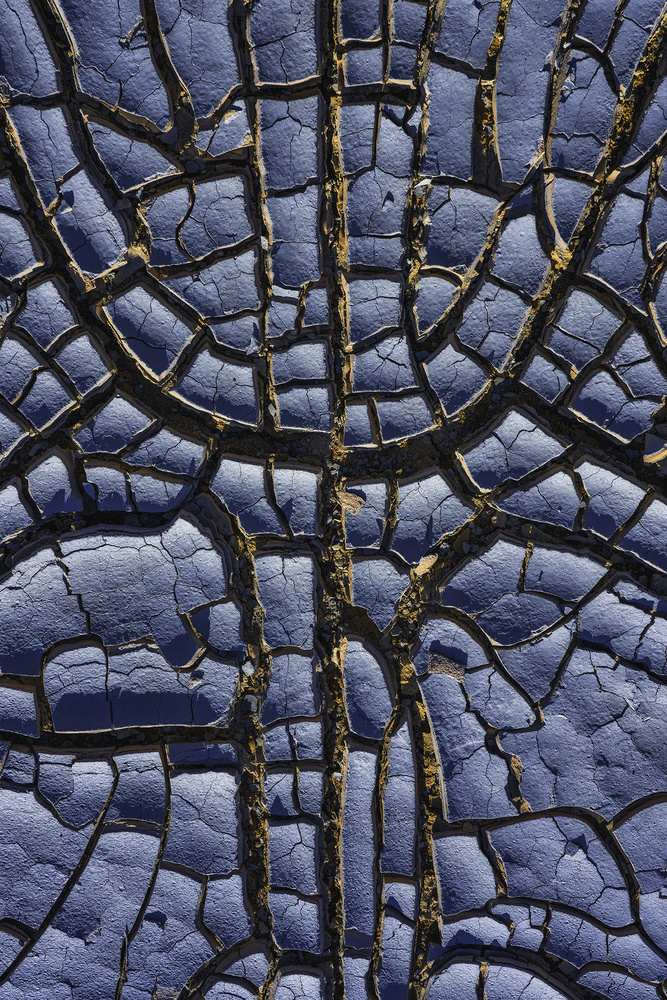 Blue Scales I by Mikkel Beiter