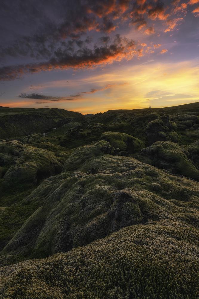 Moss Land by Mikkel Beiter
