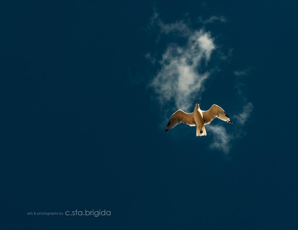 Dare To Fly by Chito L Sta Brigida