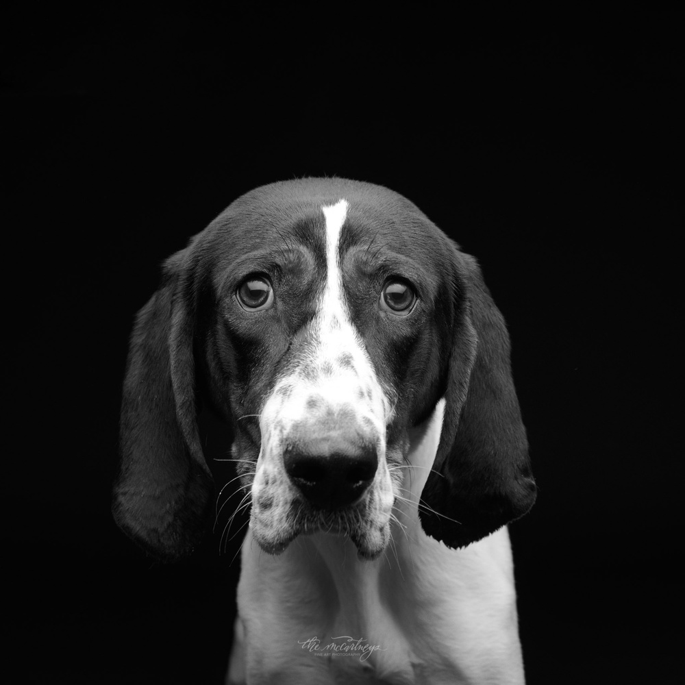 Shelter Dogs 1 by Butch McCartney