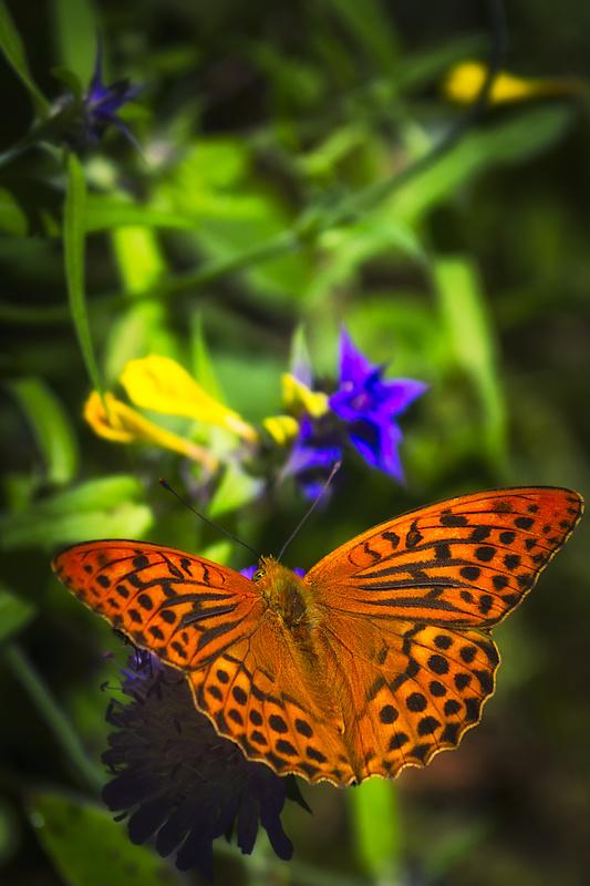 Butterfly by Arturs Biceks
