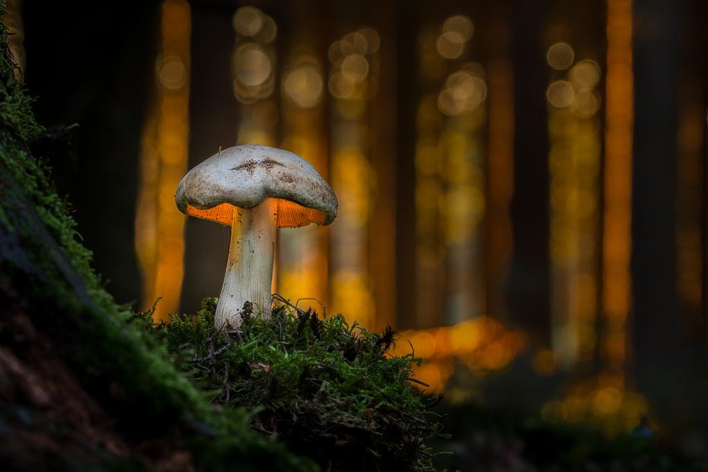 An Elf's Lantern by Marcel Zizkat