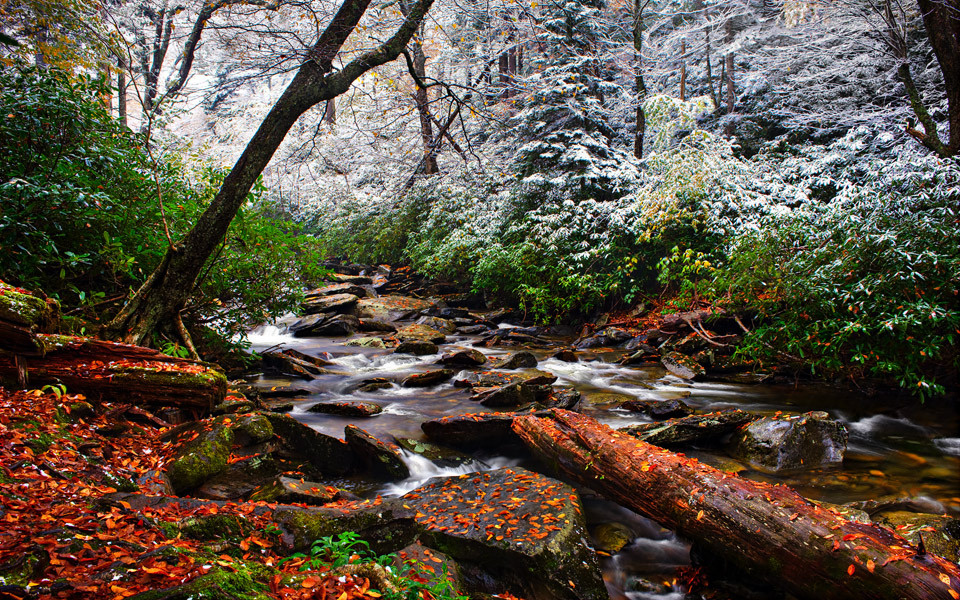 Battle of Seasons by Tom Leonard