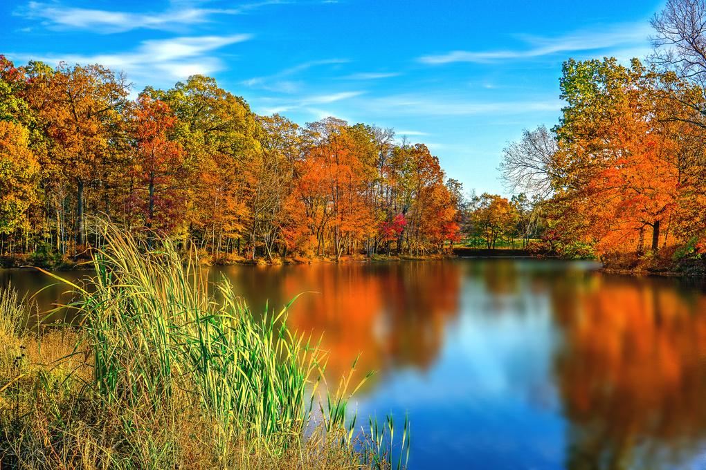 The fall Colors by Nicholas Maundu