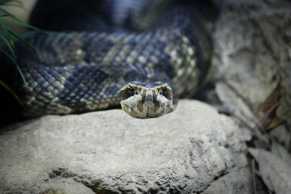 snake by Gary Stone