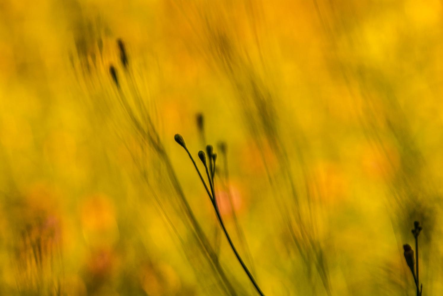 Meadow Art by David Peruzzini