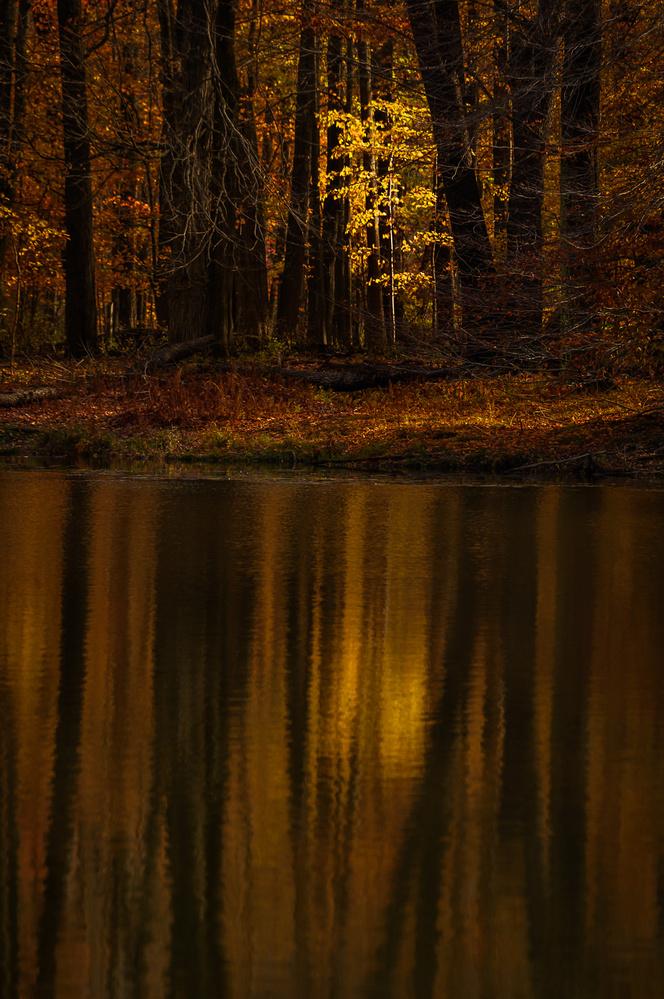 Lone Sunlit Tree by David Peruzzini
