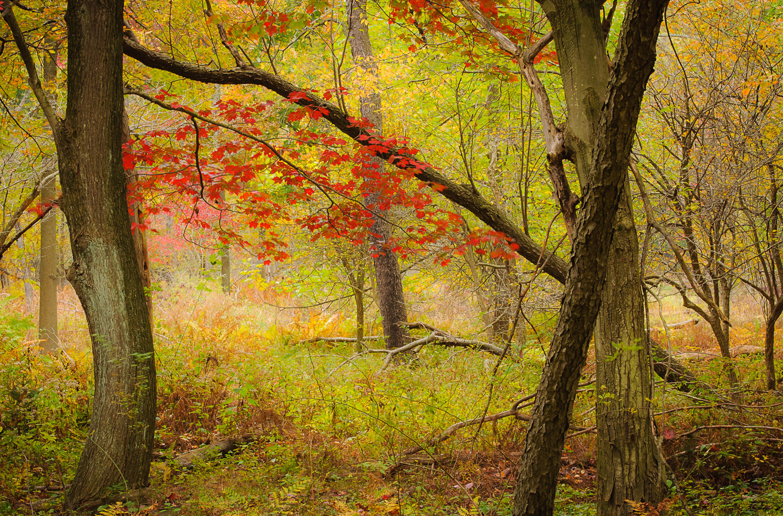 Autumn Tapestry by David Peruzzini