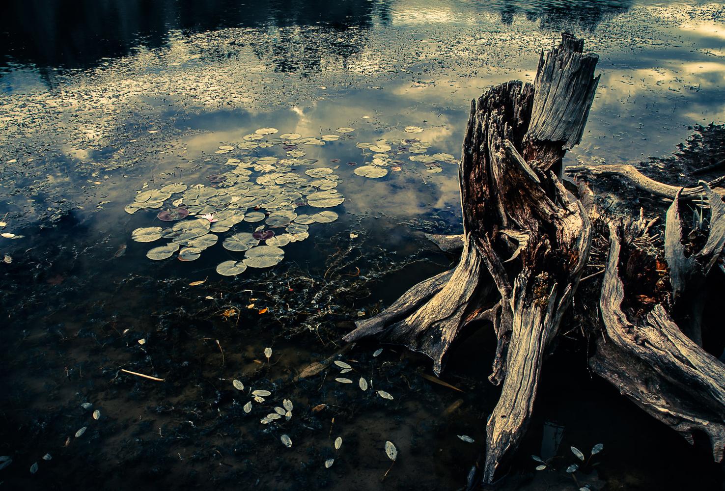 Old Stump in Drought by David Peruzzini