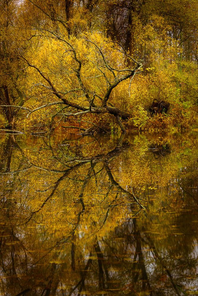 Autumn Pond by David Peruzzini
