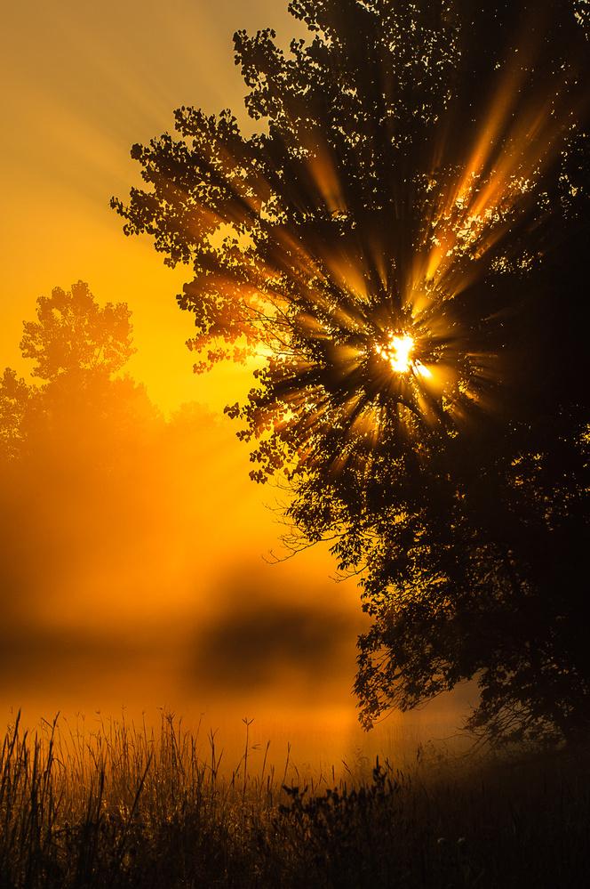 Meadow Sunrise by David Peruzzini