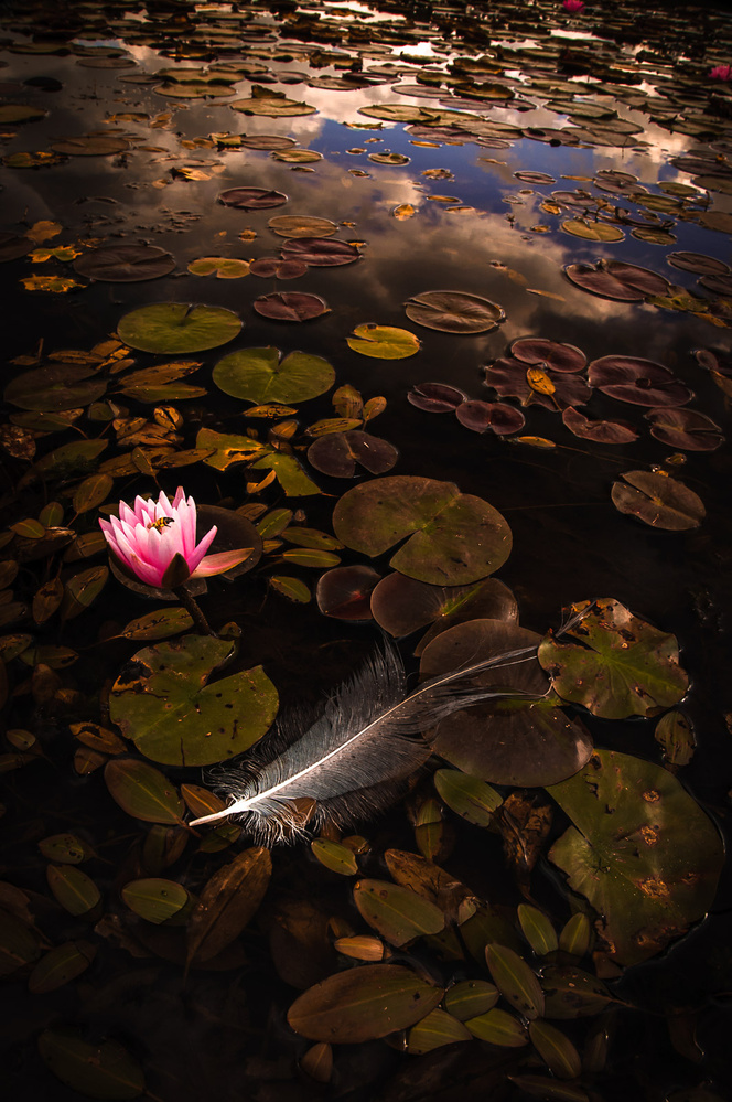 Feather and Lily by David Peruzzini