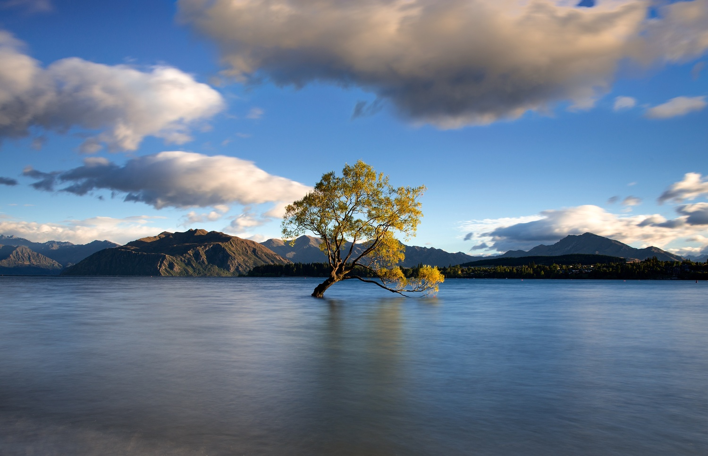That Wanaka Tree by Keith Myers