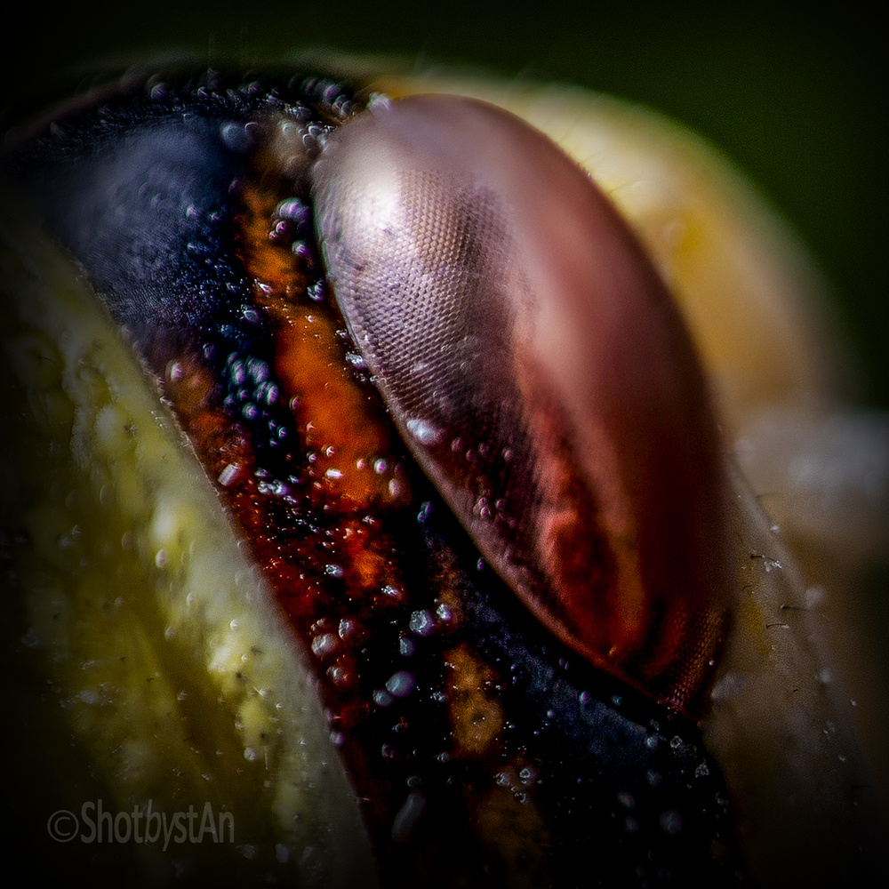 Hoppers Eye by Chris 'stAn' Hargrave