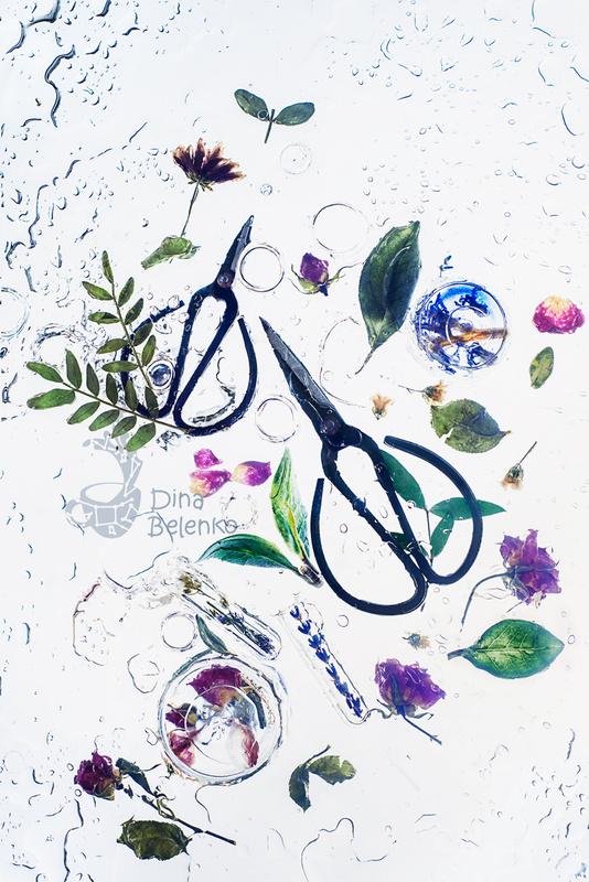 Wet garden  by Dina Belenko