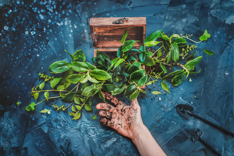 Box full of spring by Dina Belenko