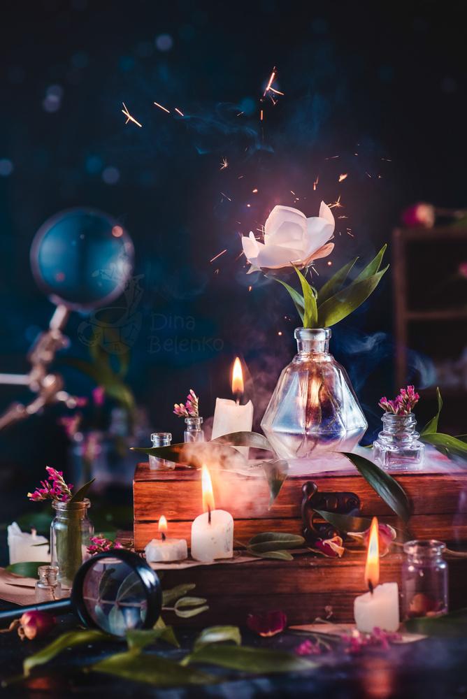 Fern Flower by Dina Belenko