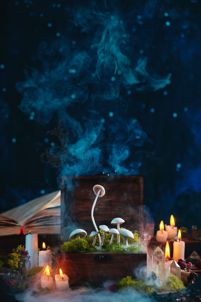 Mushroom Stash by Dina Belenko