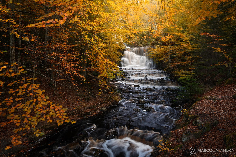 Autumn beauty by Marco Calandra