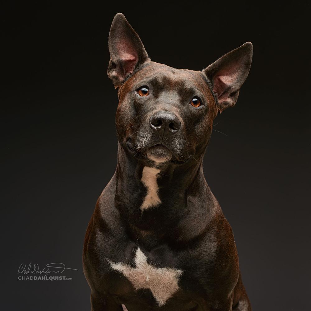 studio dog !  by Chad D