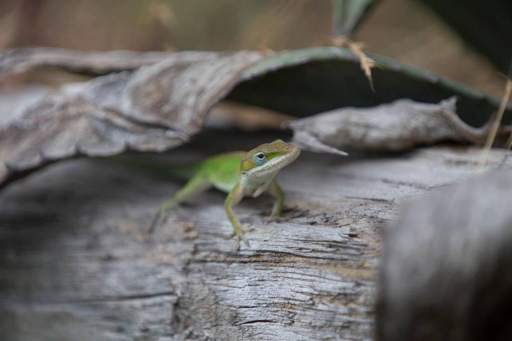 Mr. Lizard by Dewayne Hayes
