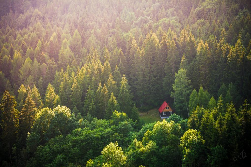 Deep in forest by Jaroslav Dvorský