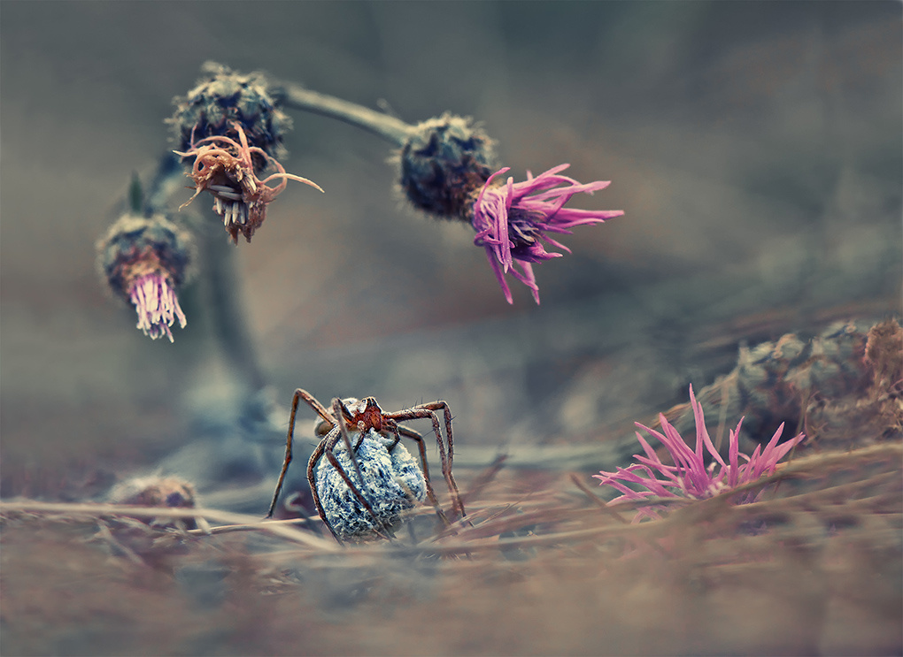 Welcome to the spider's world by Krasi St M