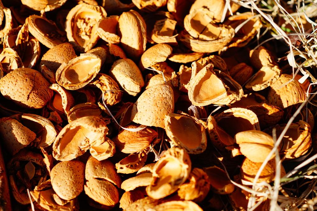 Shells of almonds by vladimir b.