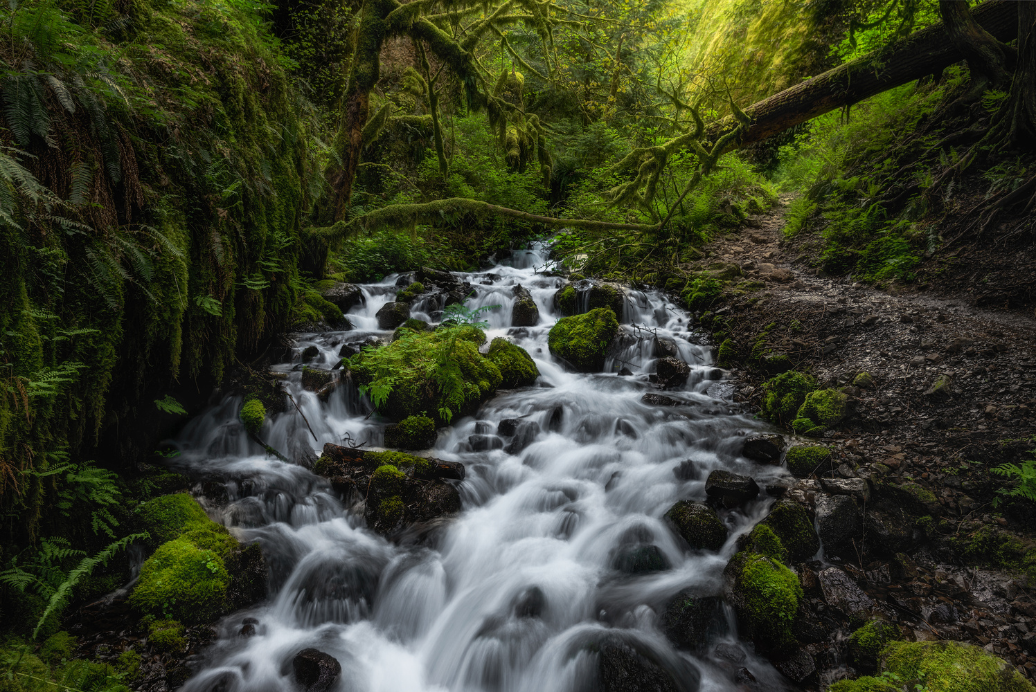 Wahkeena Creek by Chris Ward