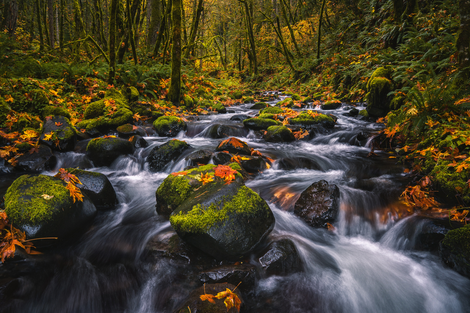 Stream of Autumn Colors by Shumon Saito