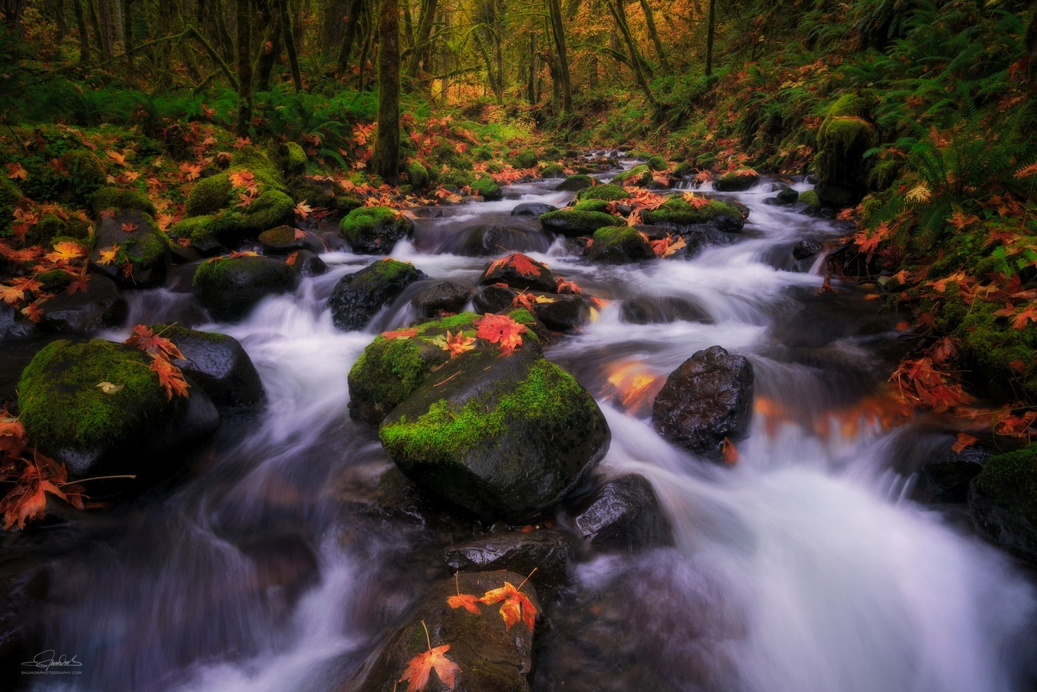 Autumn Stream by Shumon Saito