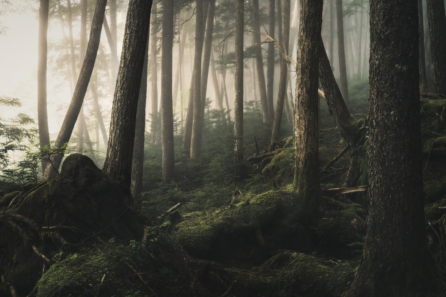 Foggy Forest by Shumon Saito