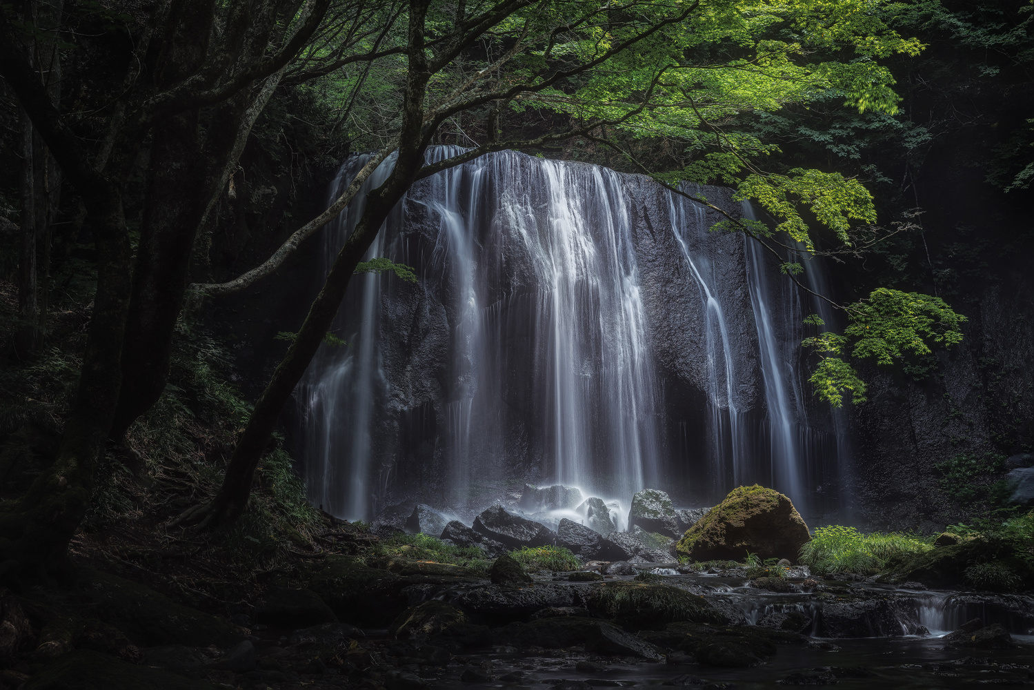 In the glow of light by Shumon Saito