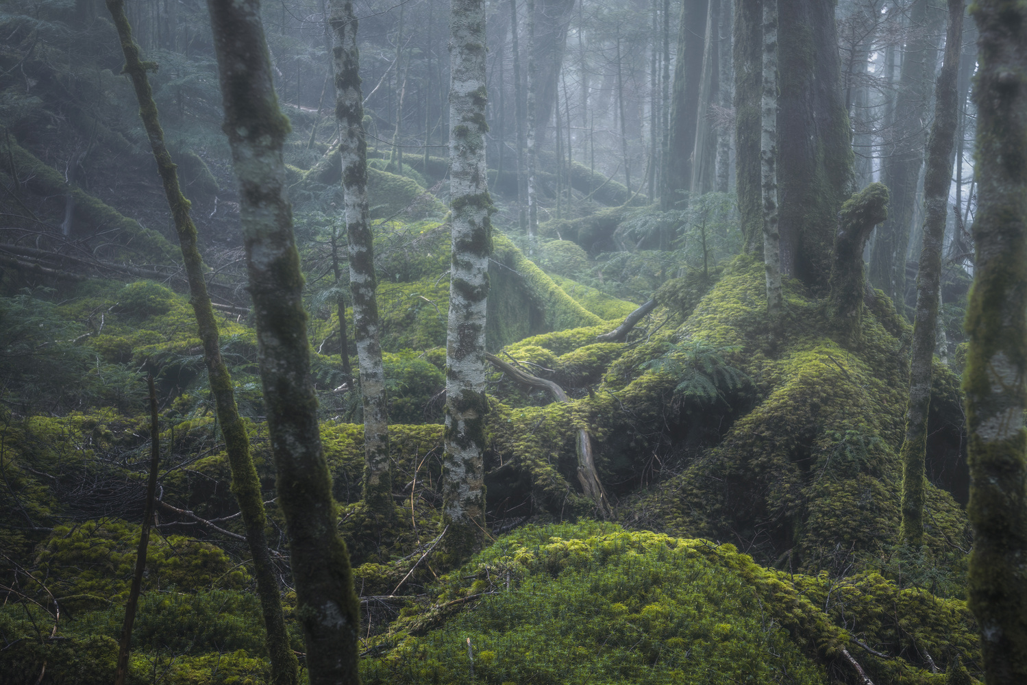 mossy forest by Shumon Saito