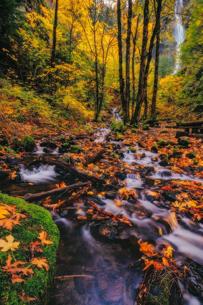 Autumn colors by Shumon Saito