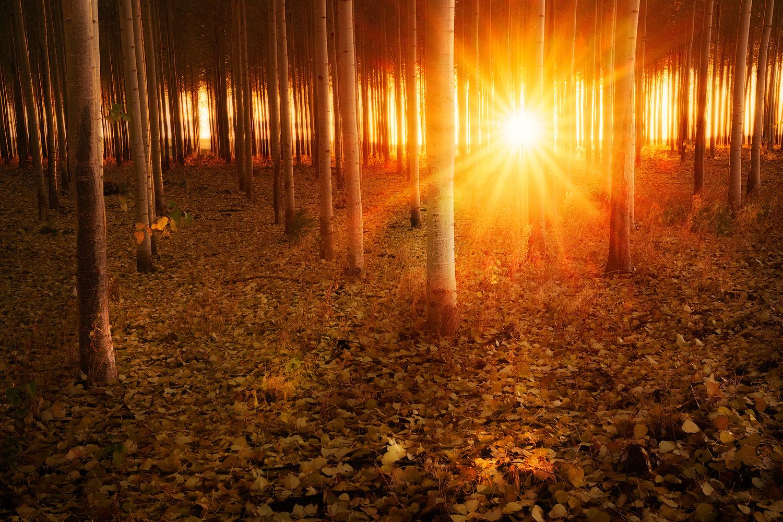 Sun light by Shumon Saito