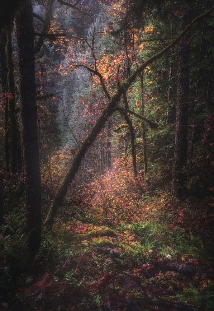 Colors of Forest by Shumon Saito