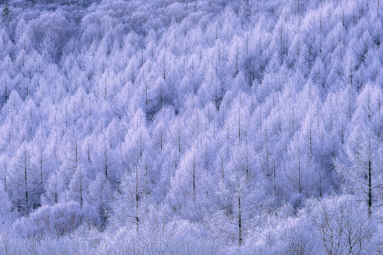 Rime frost by Shumon Saito