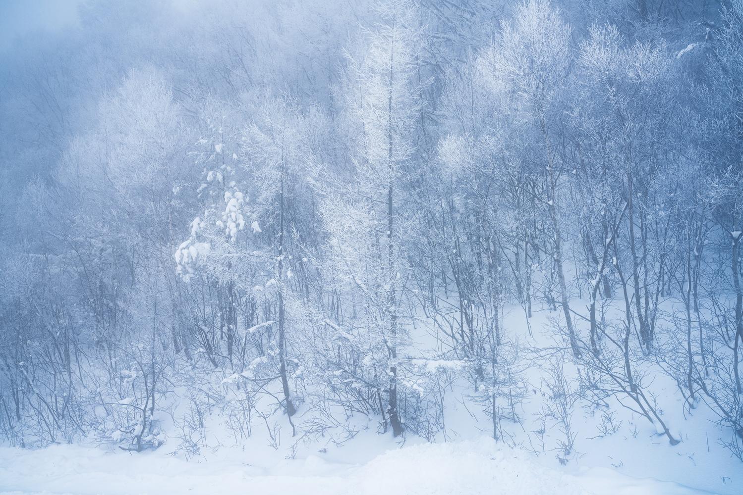 Winter Forest by Shumon Saito