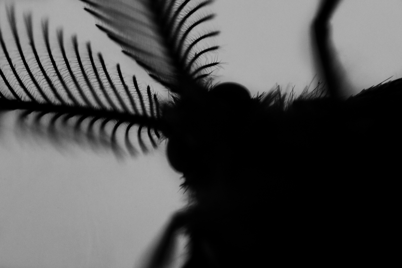 Moth by Krisztián Roppantó