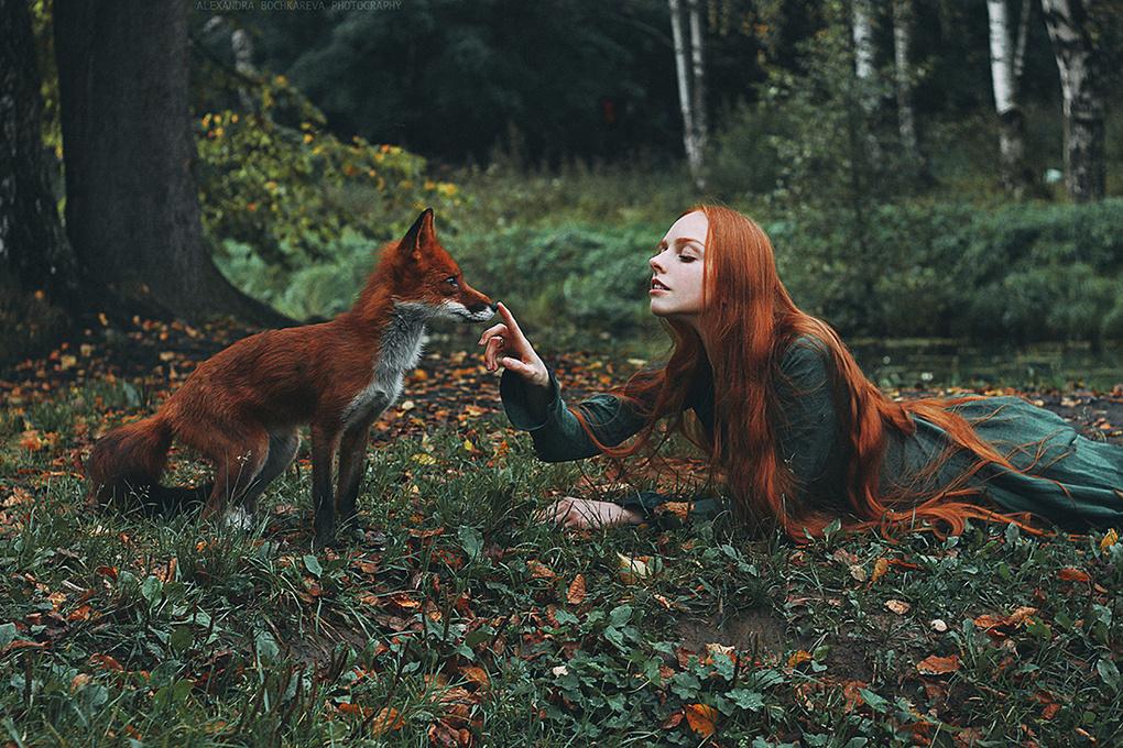 Foxes by Alexandra Bochkareva