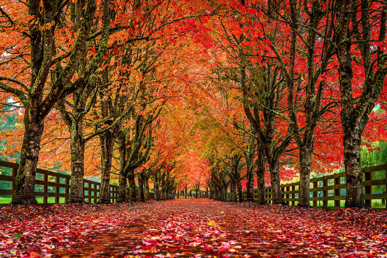 Redwood Farm by Phuoc Le