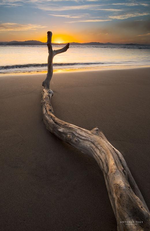 Catching the sun by Toni Tsay