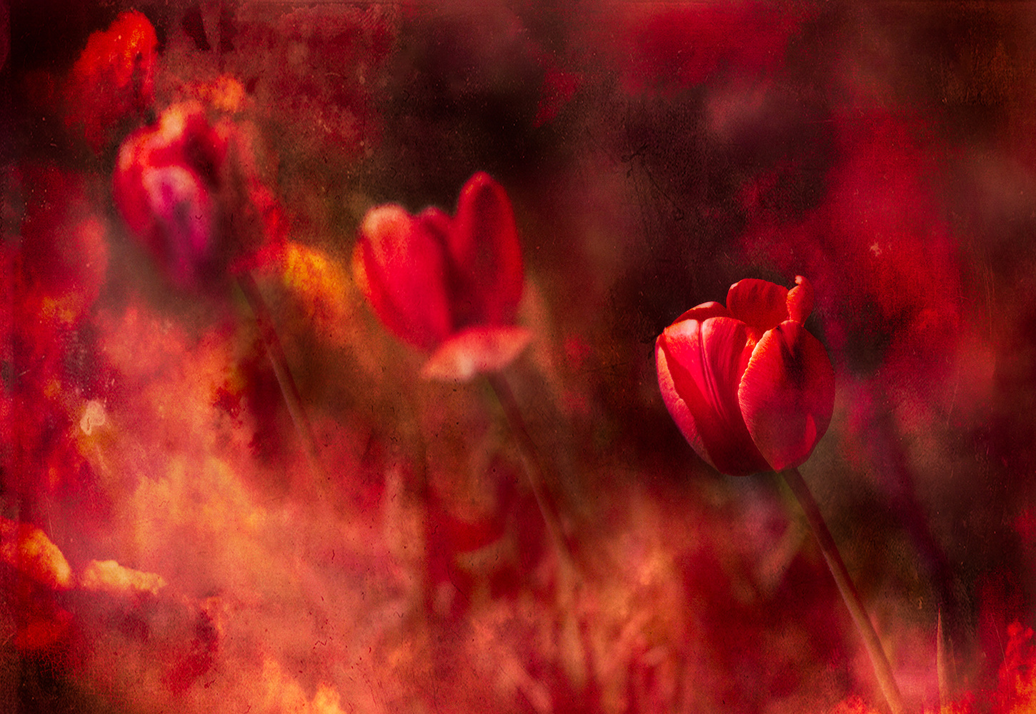 Three Flowers Red by Darcy Brown