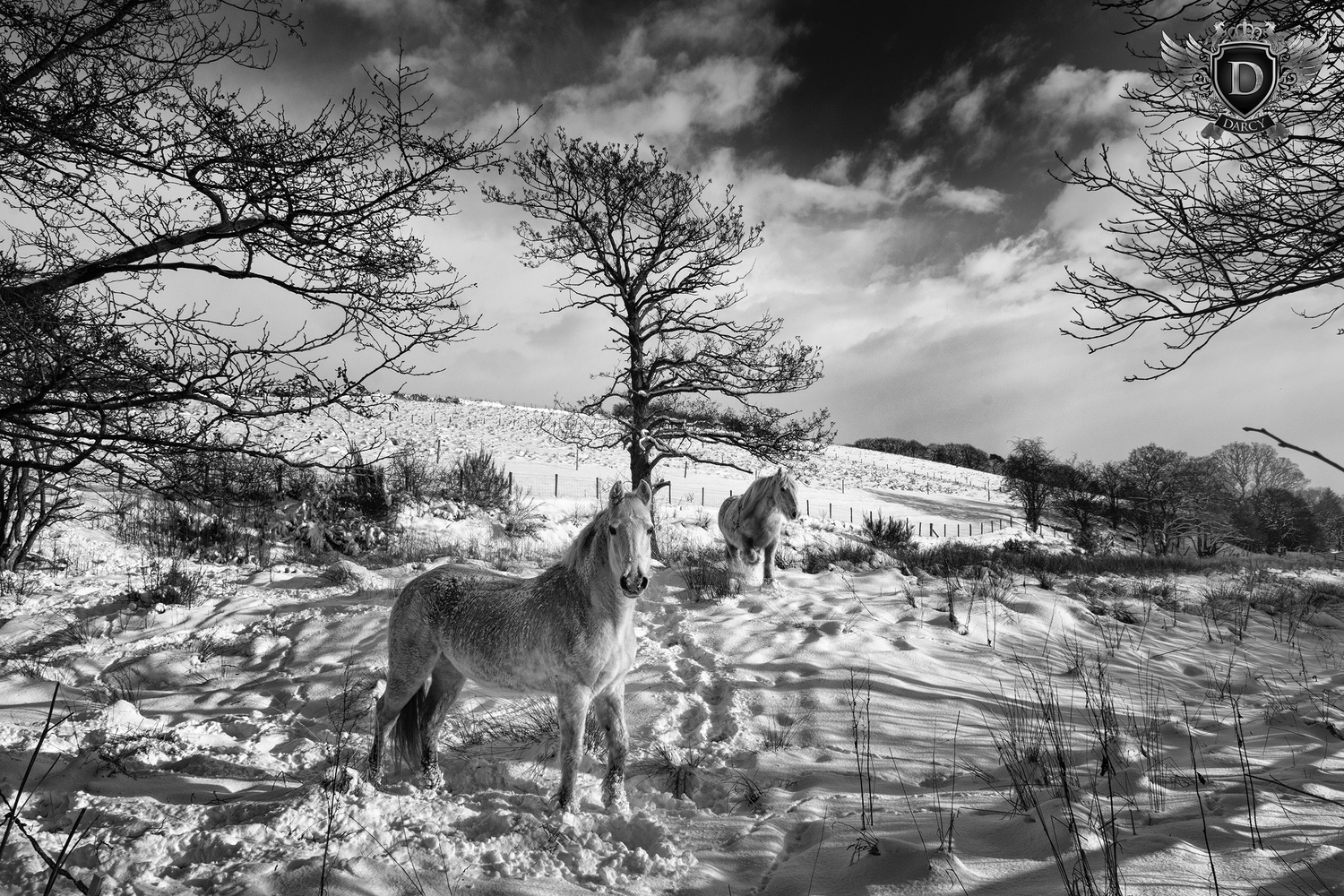 Winter Ponies by Darcy Brown