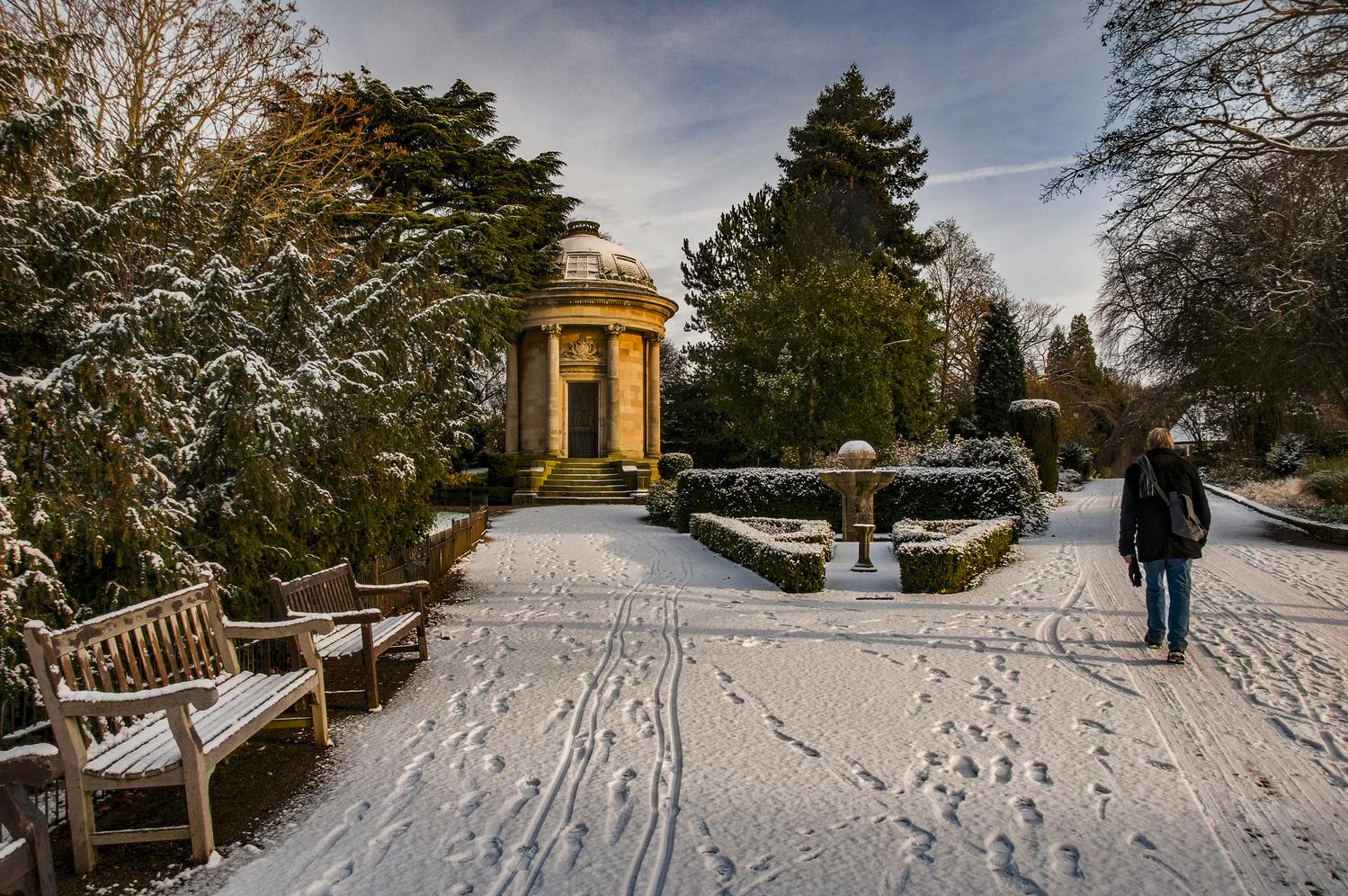Golden Winter walk by Darcy Brown